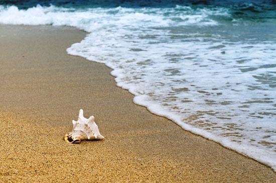 10 بیماری خطرناکی که در ساحل دریا در کمین شما است
