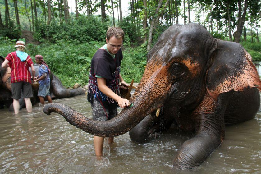 فیل سواری در تایلند؛ آیا این یک تفریح غیرانسانی است؟
